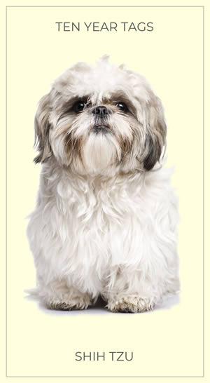 Shih Tzu Dog Cigarette Card